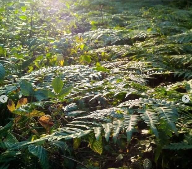 Фото дня: игра света и тени в зоне отдыха Левобережного