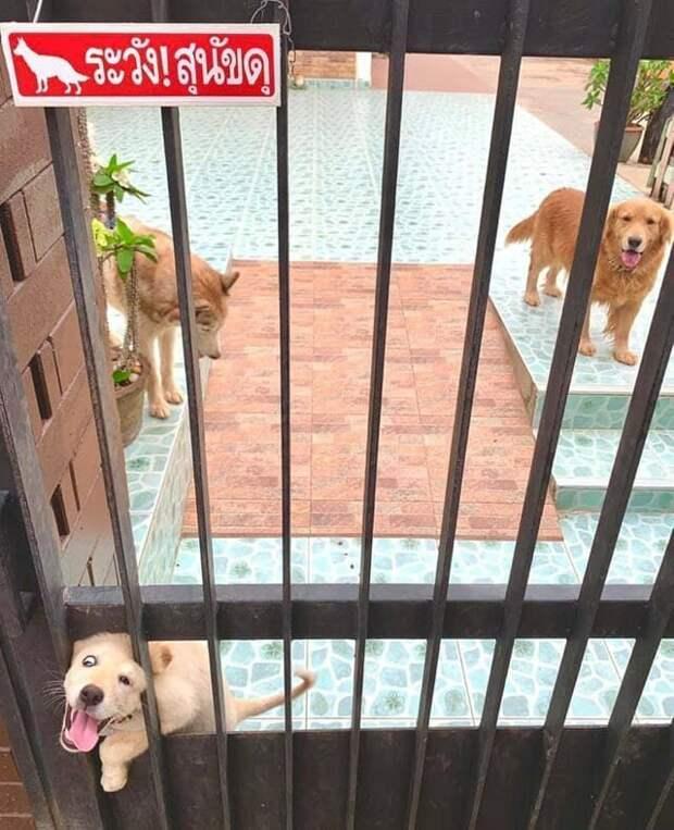 3. Осторожно, игривый пряничек! животные, кошка, прикол, собака, табличка, умора, юмор