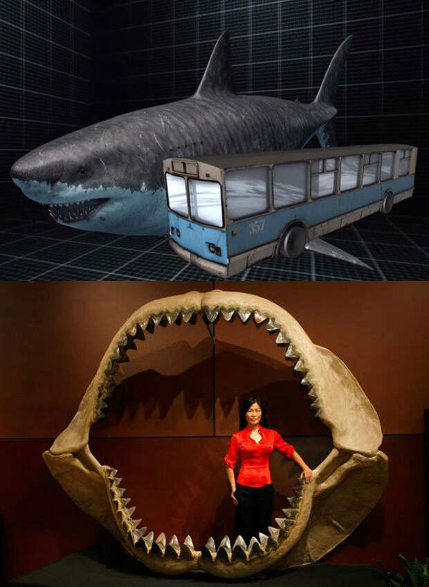 Мегалодон оставил след на дне океана: находки ученых и рыбаков