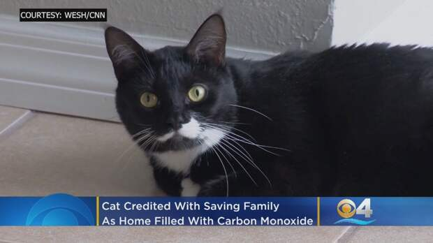 Кошка разбудила хозяев и спасла от отравления угарным газом