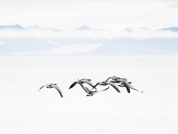 Момент тишины: фотограф снимает впечатляющие арктические пейзажи