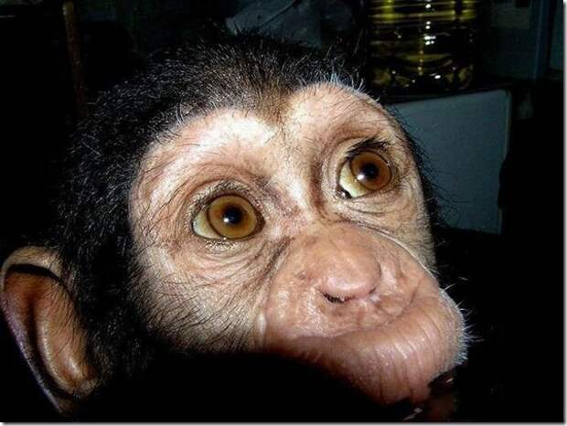 in-marmoset-a-new-mom_2_(www.funnypagenet.com)