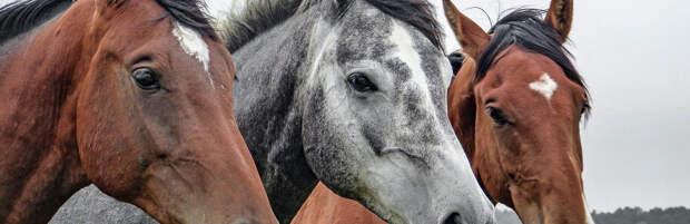 Четырех лошадей сбил водитель в Акмолинской области