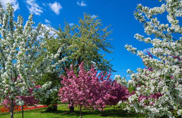 Пять причин, почему сад не цветет