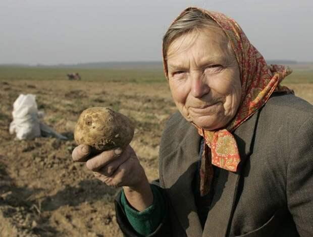 """К вопросу о """"бабушке покупающей одну картофелину"""""""