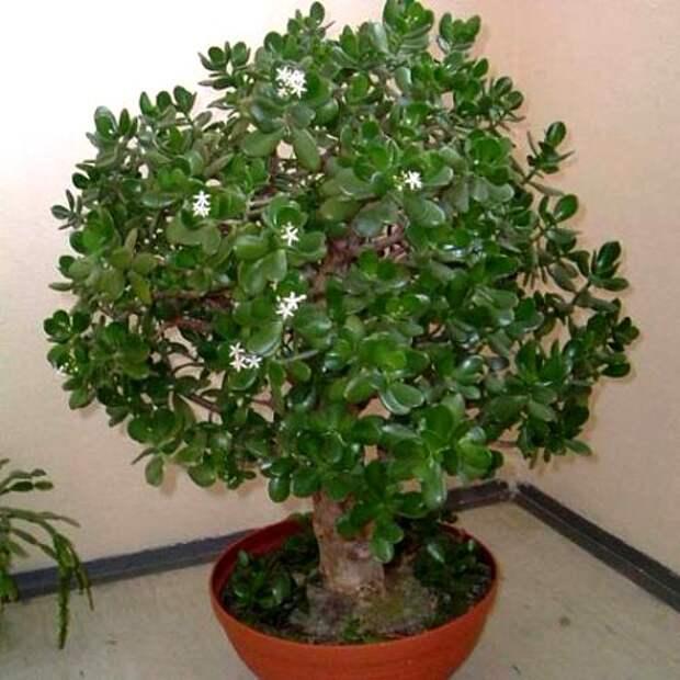 Есть одно уникальное растение, которое работает как магнит для положительной энергии