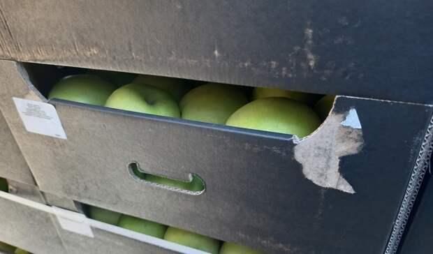 В Оренбургскую область не пропустили 20 тонн запрещенных польских яблок