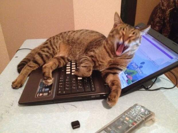 кот лежит на ноутбуке