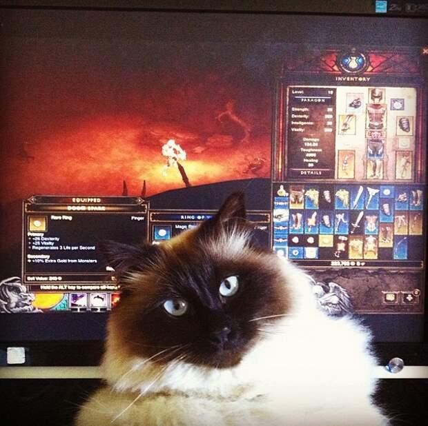 """11. """"Diablo III для лузеров, настоящие пацаны и девчонки играют в Path of Exile!"""" домашний питомец, животные, коты, лежанка, милота"""