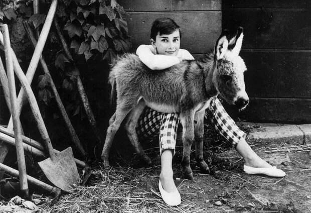 Одри Хепберн и животные: осёл. Фото / Audrey Hepburn and animals: donkey. Photo