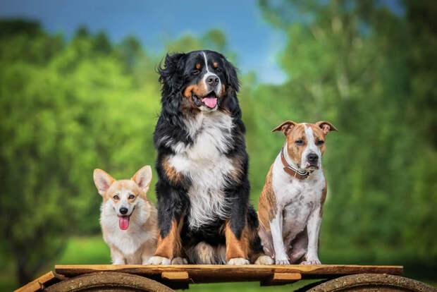 Учёные выяснили, что собаки способны распознавать ложь человека