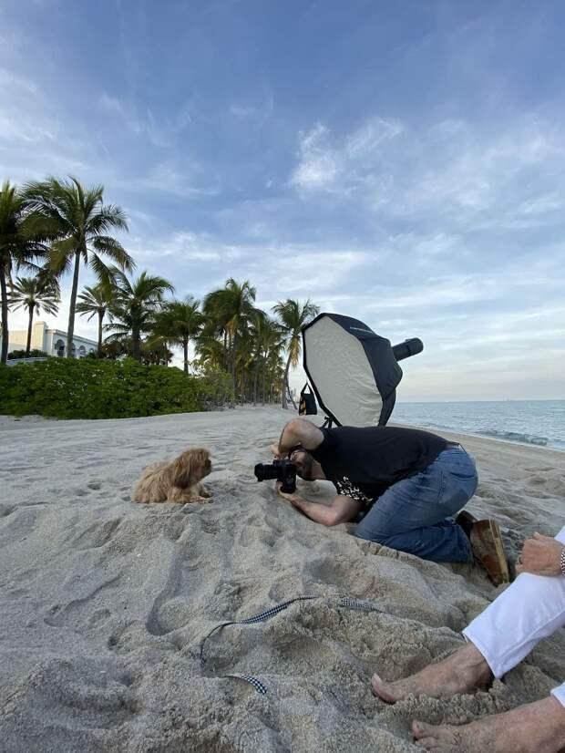 Закат, пляж и ветерок: неотразимые фотографии милашки-пса