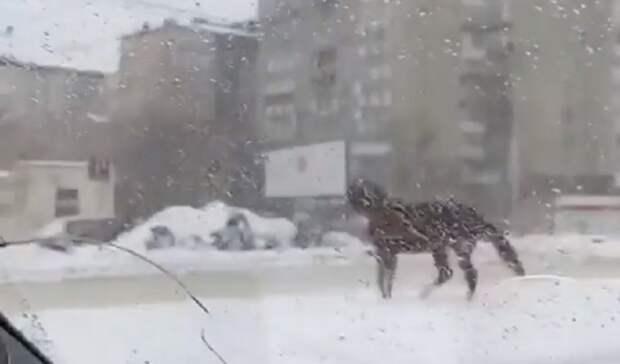 Сбежавшая лошадь в Ставрополе мешала дорожному движению