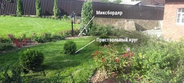 Хвойные растения на фоне газона
