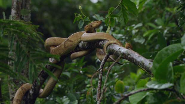 11. Кеймада-Гранди (остров в Бразилии) вокруг света, интересное, факты