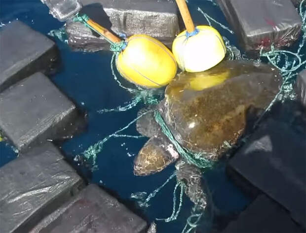 53 миллиона долларов одиноко дрейфовали в океане… И они стали ловушкой для несчастной черепахи!