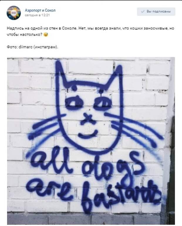 Фото дня: Дерзкие коты Сокола