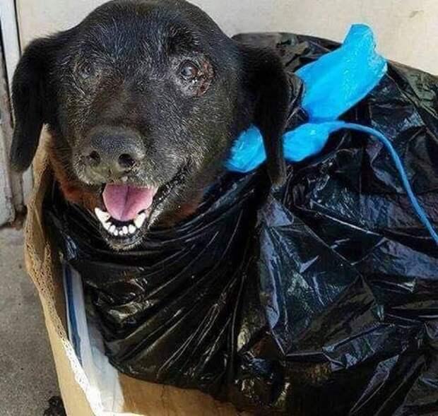 Хорошего песика подкинули в приют в грязном пакете для мусора