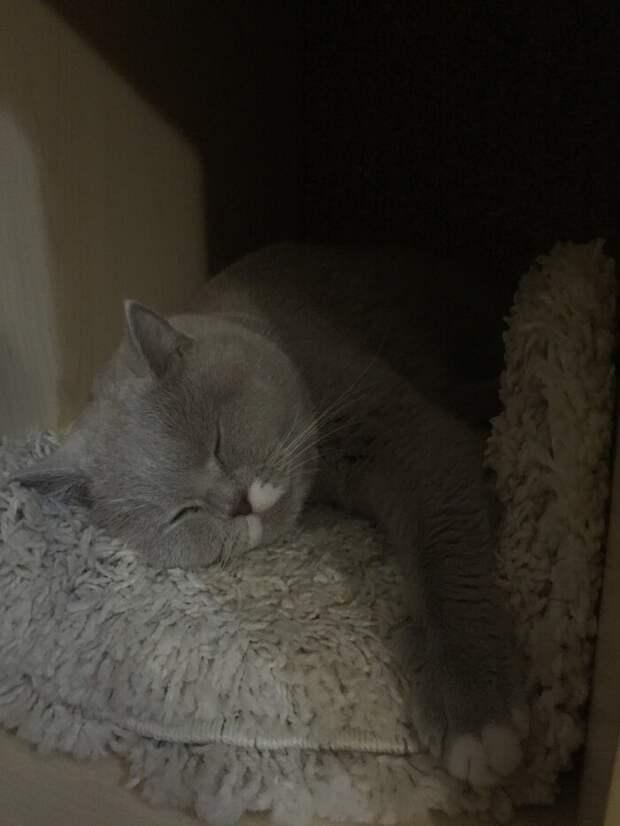Фитнесс-браслет и кот. Как узнать сколько же спит эта пушистая сволочь? Фитнесс браслет, коты, прикол, юмор