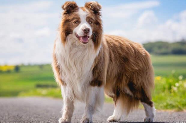 Лучшие собаки для семьи, детей и беременных мам