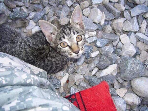 Там она увидела маленькую кошку, которая едва могла ходить из-за аномалии развития афганистан, животные, кошка