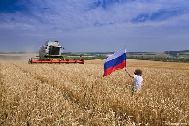 Сельское хозяйство стало одной из опор независимости России
