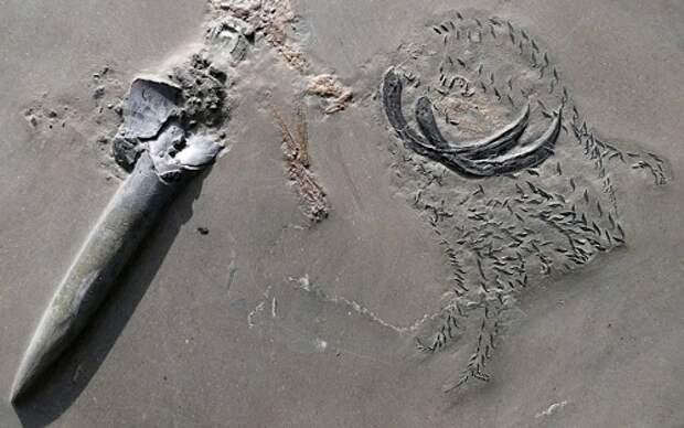 Исследователи обнаружили окаменелость, на которой три морских существа поедали друг друга