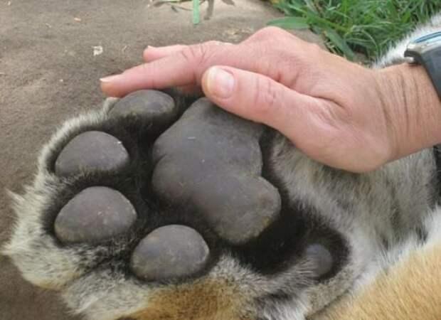 Гиганты: 10+ животных, чей реальный размер можно оценить лишь всравнении