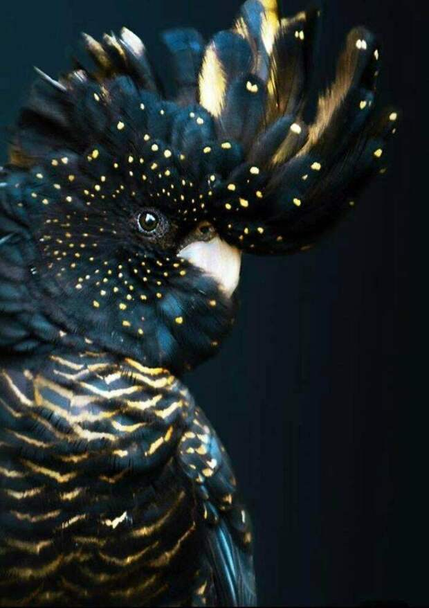 14 животных необычного цвета, в каком мы не привыкли их видеть