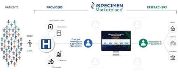 Схема функционирования маркетплейса iSpecimen