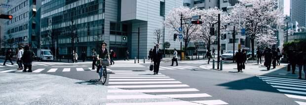 Лаборатория «Зеленые трансформации города» изучила ожидания горожан