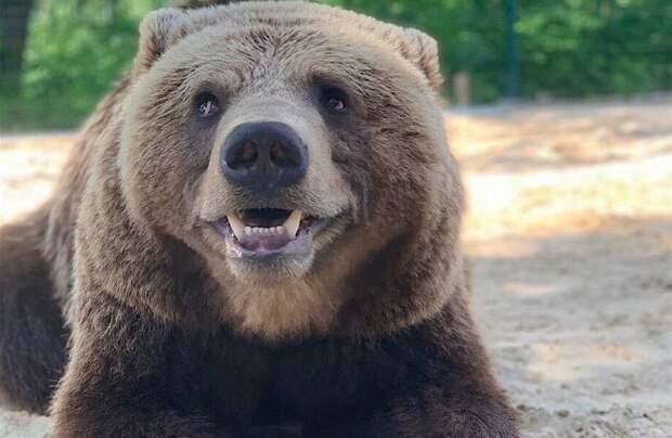 Фото дня: медведь Мансур, которого приютили летчики
