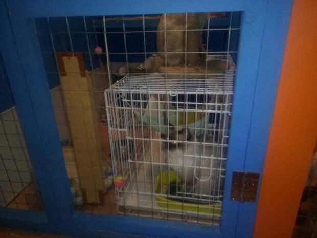 Сиамскую кошку спустя неделю вернули в тот же двор, где ее нашли