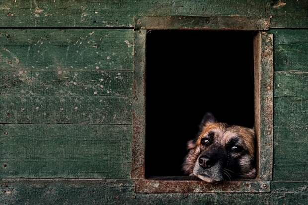 Лучшие снимки собак с фотоконкурса 2017