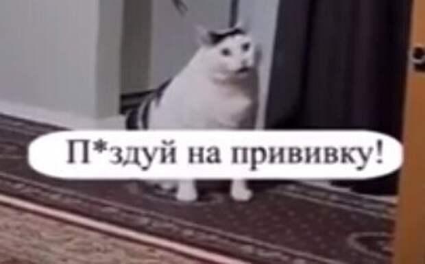 """""""***дуй на прививку"""": Мособлштаб опубликовал видео с котом, нецензурно призывающим вакцинироваться"""