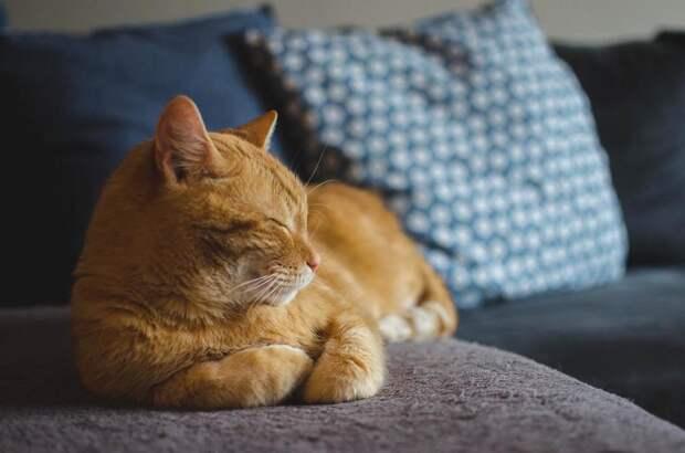 Кот, посланный кем-то