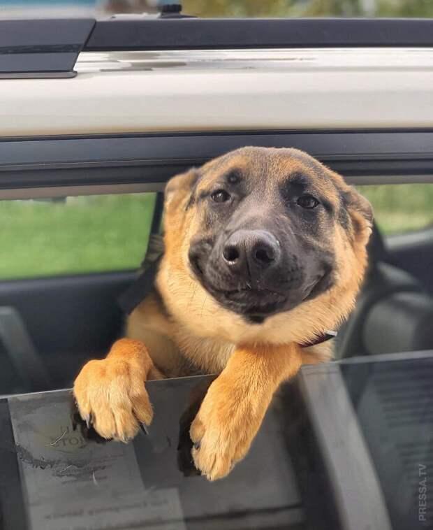 Улыбающиеся собаки
