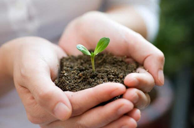 Как подготовить грунт для огорода на подоконнике