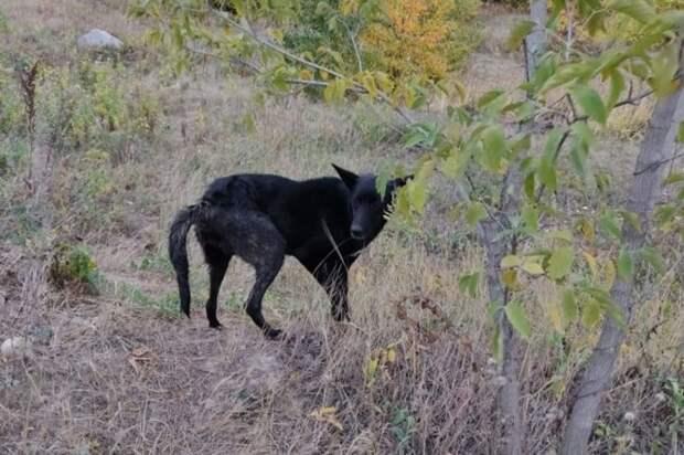 Собаку, два дня просидевшую в колодце, спасли в Челябинске