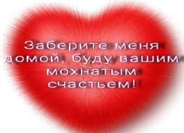 Красивый, обаятельный, косенький)) парнишка готов подарить своему хозяину всю свою любовь!