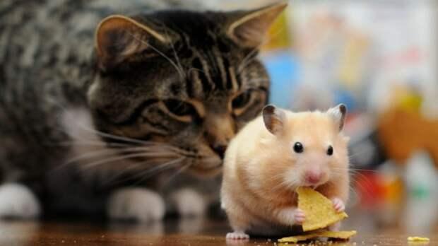 Коты и хомяки, смешные переписки