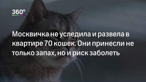 Москвичка не уследила и развела в квартире 70 кошек. Они принесли не только запах, но и риск заболеть
