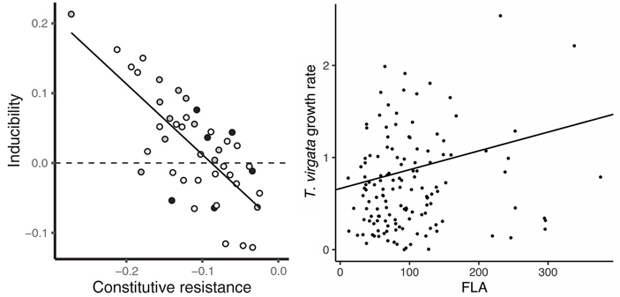 Рис. 5. Трейдофф (отрицательная зависимость) между индуцированной и постоянной защитой от фитофагов у золотарника высочайшего