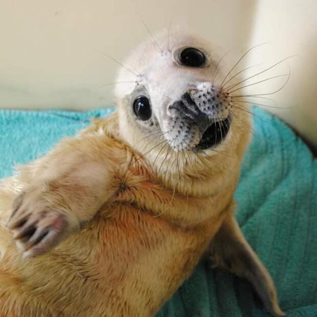 Очаровательные тюлени