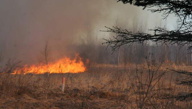 Более 6 тысяч возгораний сухой травы зафиксировали в Подмосковье с начала весны
