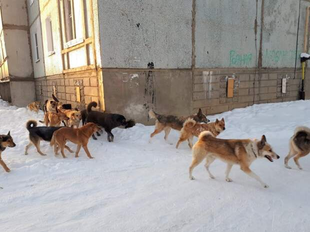 Кто должен ответить за смерть трех человек от нападения бродячих собак в Красноярске?