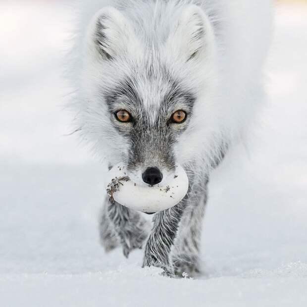 Фотомодели животного мира: 13 фаворитов конкурса фотографий дикой природы