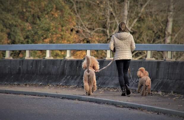 Идея бизнеса: выгул собак