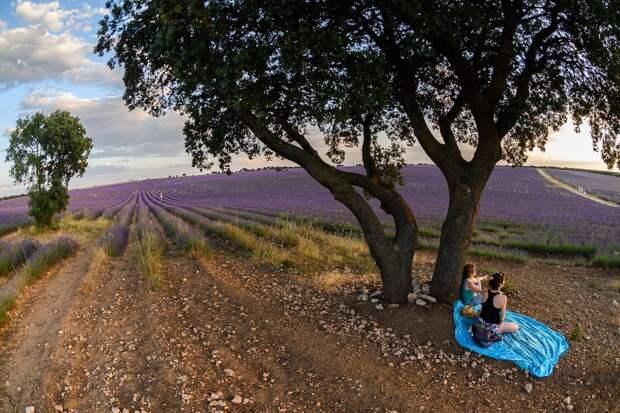 Услада для глаз: бесподобные лавандовые поля в Испании