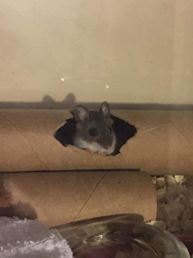 Девушка попыталась спасти мышонка, которого посчитали мёртвым